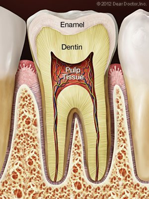 Root Canal Washington DC